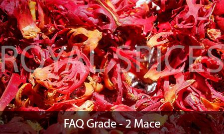 FAQ Grade-2 Mace