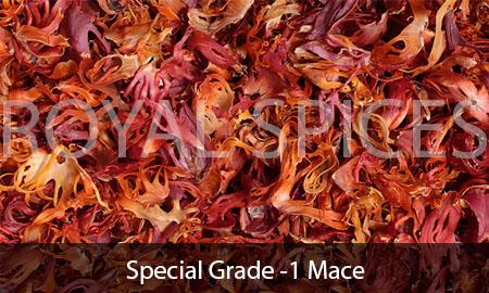 Special Grade-1 Mace